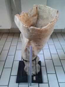 #MuseumMastermind Sembra un vaso di terracotta ma… siamo al #MuseoZoologiaRoma. Quindi indovina cos'è! #MuseumWeek