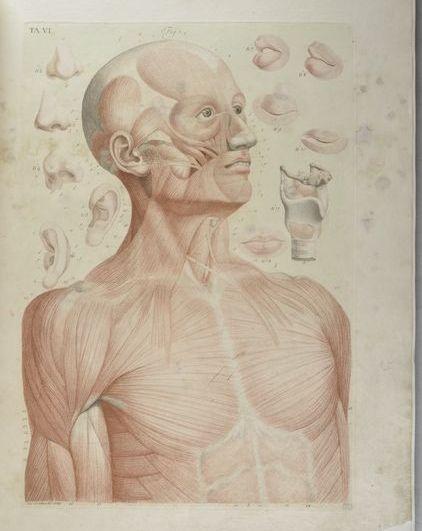 3. Paolo Mascagni, Anatomia per uso degli studiosi di scultura e pittura, Firenze, 1816 (Biblioteca di Medicina, Chirurgia e Farmacia, Università di Pisa)