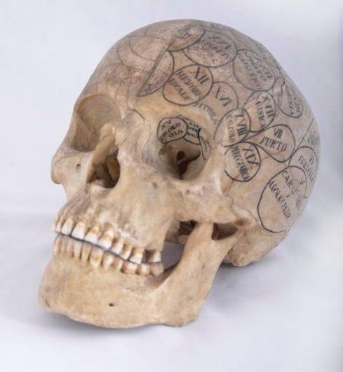 "4. Mappa frenologica, XIX sec. (Museo di Anatomia Umana ""F. Civinini"", Università di Pisa)"