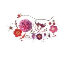 Regine Hegedorn (Germany), Roses (1) [Rosa sp. (Rosaceae)], 2001