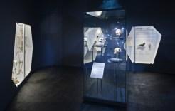 Evolució: J. M. Llobet / museuciencies