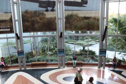 生きた植物の展示もあります
