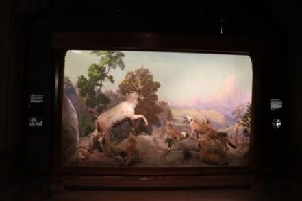 ジオラマはどのシーンも動物たちの姿を活写しています