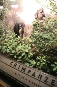チンパンジーのジオラマにも寄付者の名前が