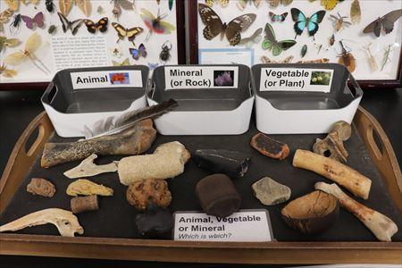 いろいろな化石のハンズオン展示