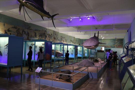 ジオラマなど自然史系の展示も充実
