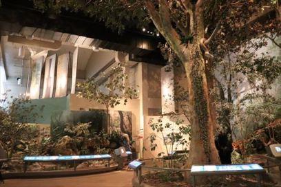 香港の自然を再現している等身大のジオラマ(ウォーク・スルー・ジオラマ)