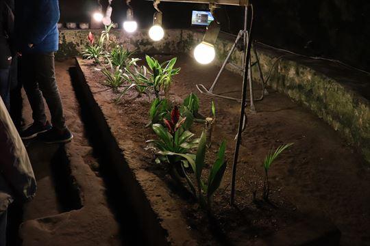 植物の生育実験