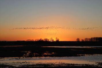 朝日と渡り鳥(?)。モン・サン・ミッシェルはラムサール条約の登録地です