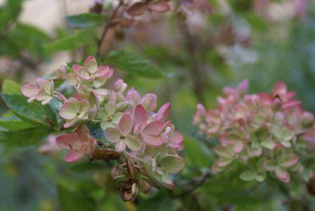 Легкий цвет