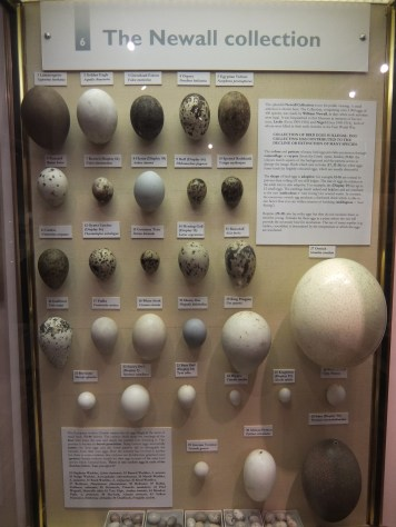 newall-egg-collection-eton-college-natural-history-museum