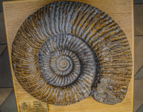 Huge Fossil Ammonite to Touch