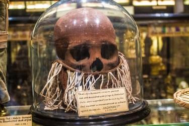 Pitt Rivers Museum Skull