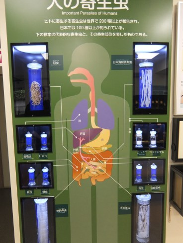 Meguro Parasitological Museum human body