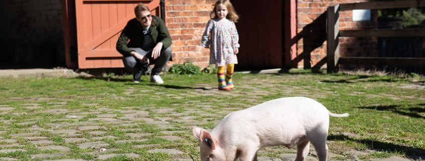 A young girl is standing in a farm and there is a piglet in the foreground.