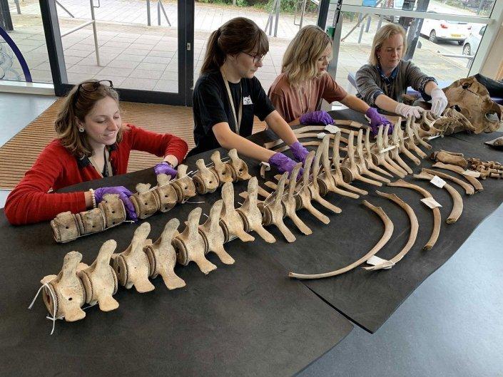 Museum staff organising whale bones