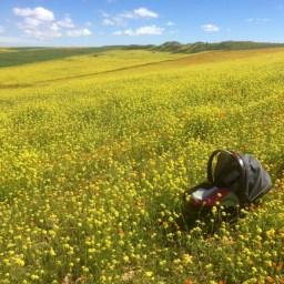 Spring in Morocco 2017 (15)