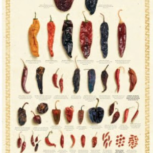 Dried Chile Poster