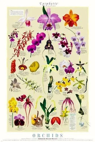 Epileptic Orchids Poster