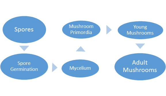 Mushroom Growth Process