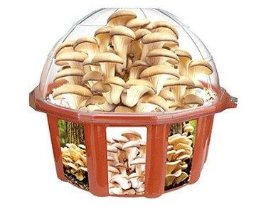 Grow kits medicinal mushrooms and natural remedies blog dunecraft mushroom growing kit solutioingenieria Images