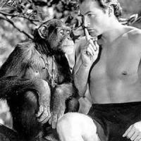 Muerte chimpancé Chita crea dudas, muchos dicen no era verdadero primate compañera de Tarzán