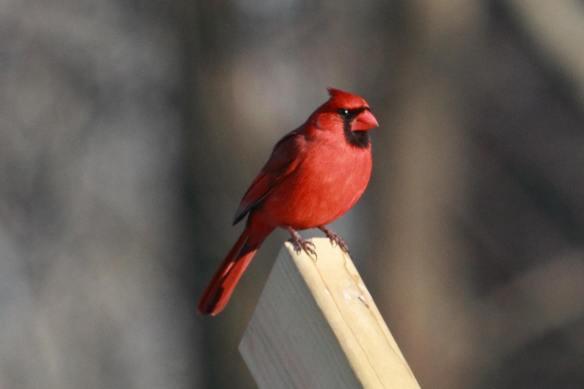 CNC Cardinal IMG_1348_1