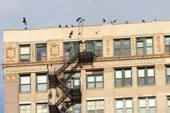 Fire Escape Crows IMG_2056_1