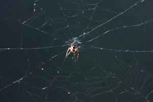 Monroe Harbor Spider