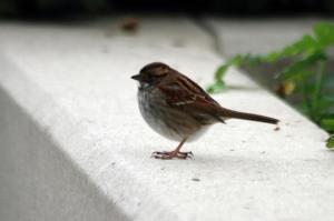 WT Sparrow IMG_9707_1