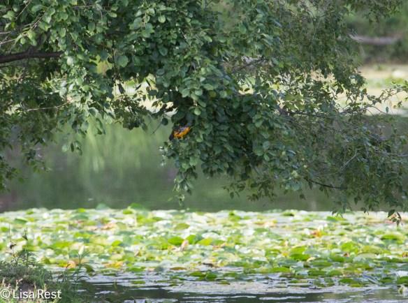 BAOR Lake Katharine 8-10-14-2447