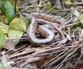 Anaconda 7-05-2016-5066
