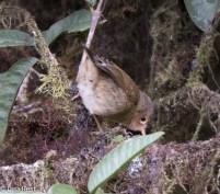 warbler-finch-07-13-2016-8680