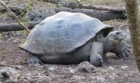 giant-tortoise-07-14-2016-0374