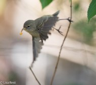 gray-warbler-finch-07-15-2016-6676