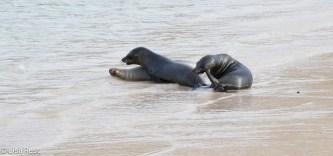 sea-lions-07-15-2016-7100