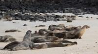 sea-lions-07-15-2016-7127