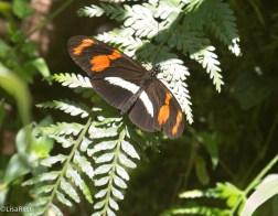 Butterfly 11-22-2017-0586