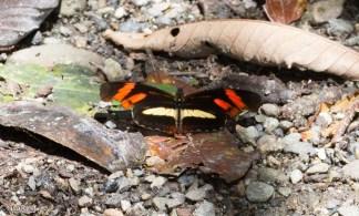 Butterfly 11-22-2017-0588