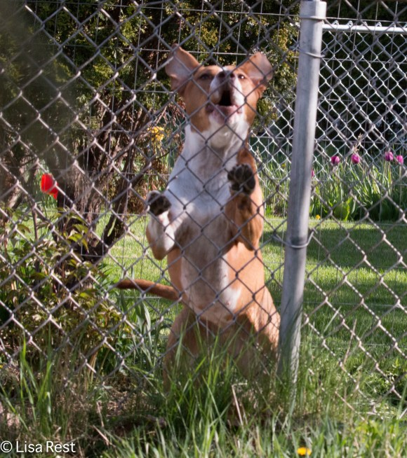 Neighbor Dog 5-5-18-2405
