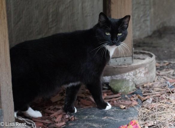 Cat 8-18-18-7833