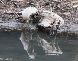 On closer inspection, wood sculpted by water, not a bird sitting