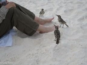 lindes-feet-at-gardner-bay-with-mockingbirds-07-16-2016-0516