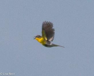 YBCH Goose Lake Prairie 07-03-17-5108
