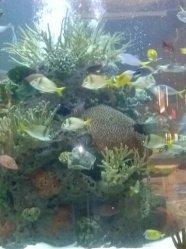Opry Mills Tennessee Aquarium
