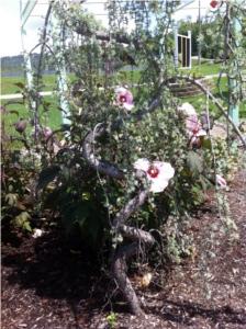special needs nashville blind garden sensory franklin