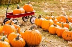 nashville fall fun pumpkin patches