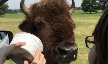 An Animal Adventure at Tennessee Safari Park