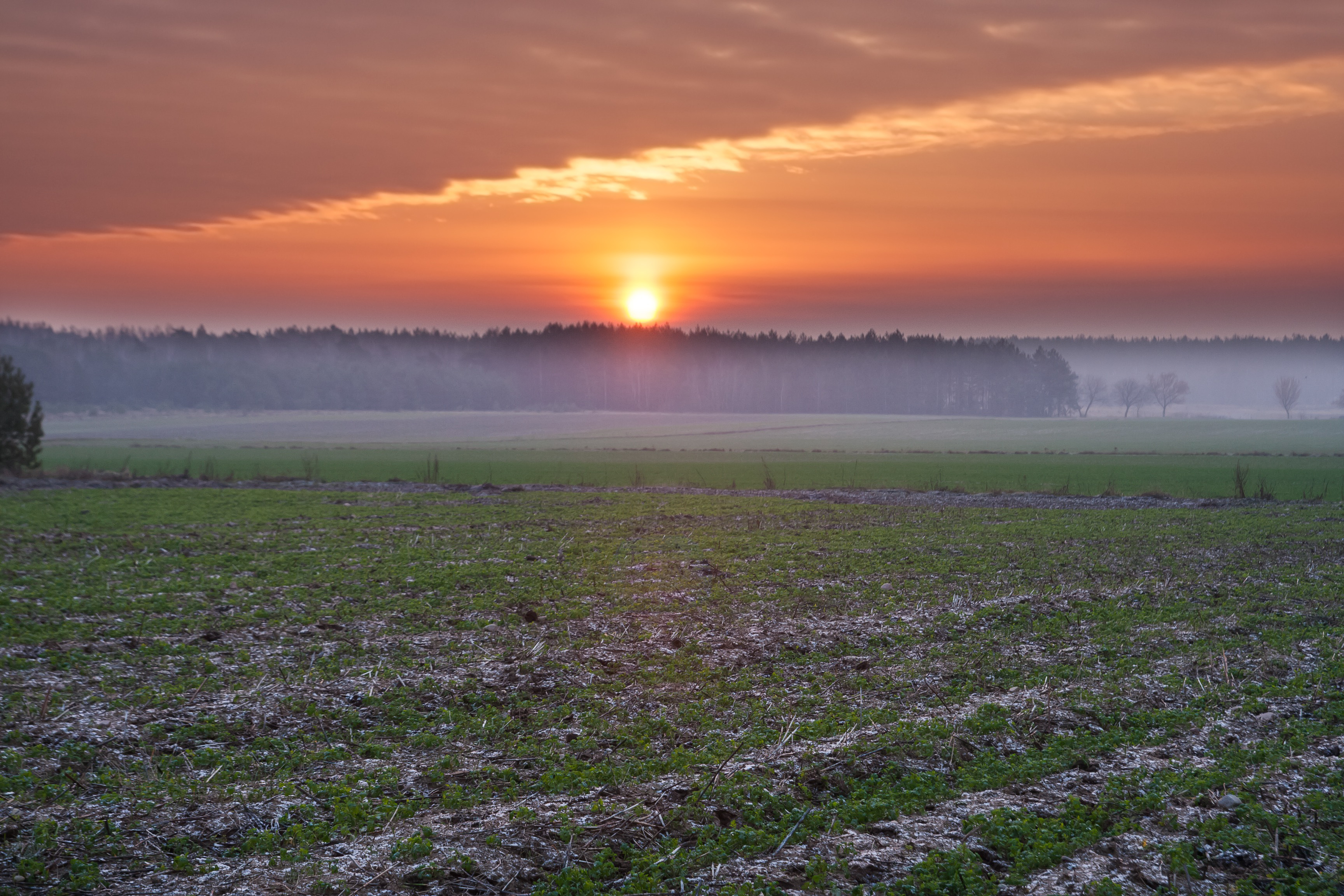 A foggy sunset over a field.