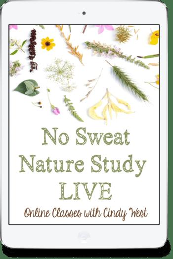No Sweat Nature Study Live!
